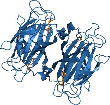 Figure 6.14:Scheme of the tetrameric protein streptavidin and biotin.